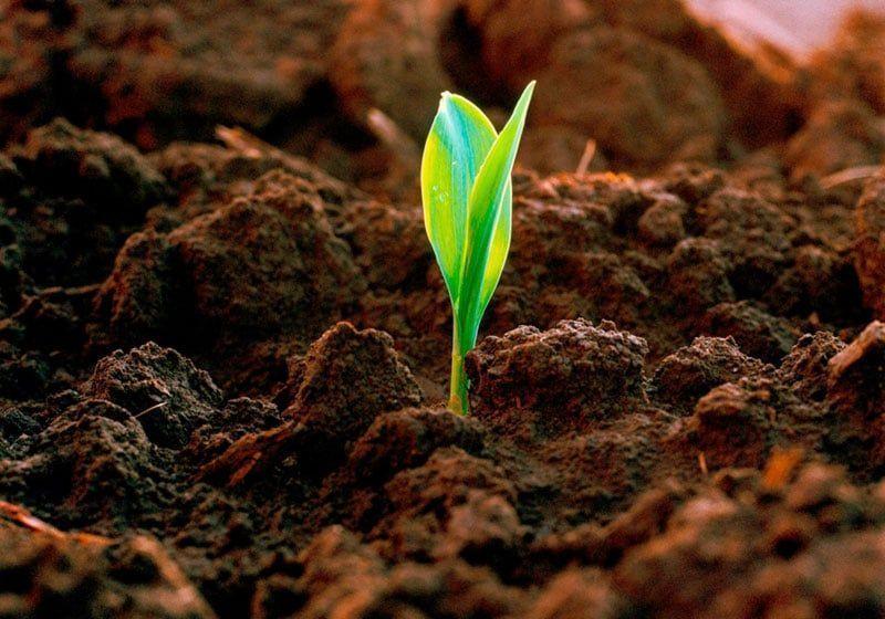 Thomson Reuters y la sostenibilidad