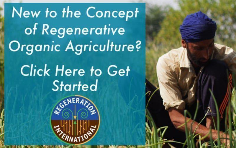 Someterán a Monsanto a tribunal