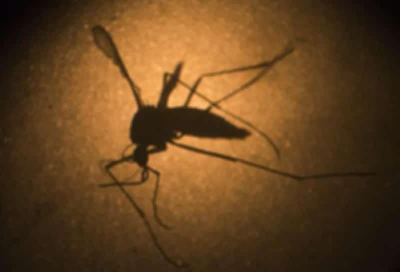 SAP devela su plan para colaborar en la lucha contra el Zika