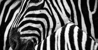 zebra-technologies-itusers
