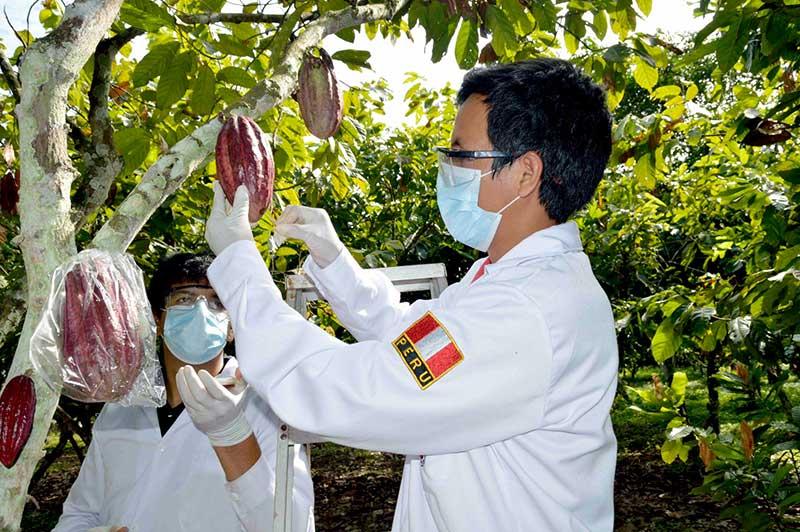 PRODUCE cofinancia innovación tecnológica del sector cacaotero