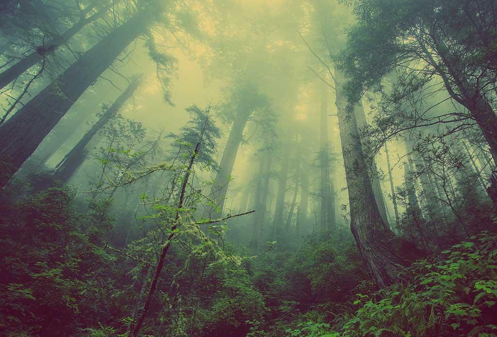HP se compromete a ser más positiva para los bosques