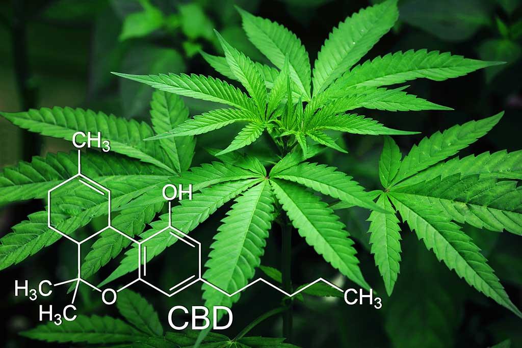 Mercado mundial del cannabis se sitúa por encima de los 340 mil millones de dólares