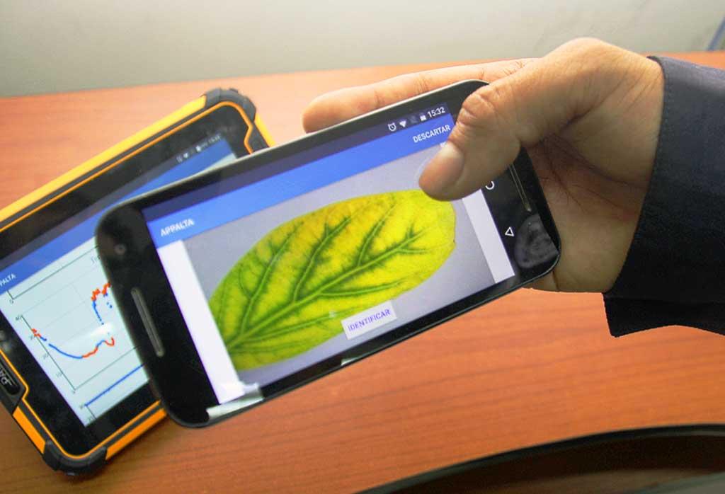 Presentan Sistema que Monitoriza plantaciones de Palta Hass