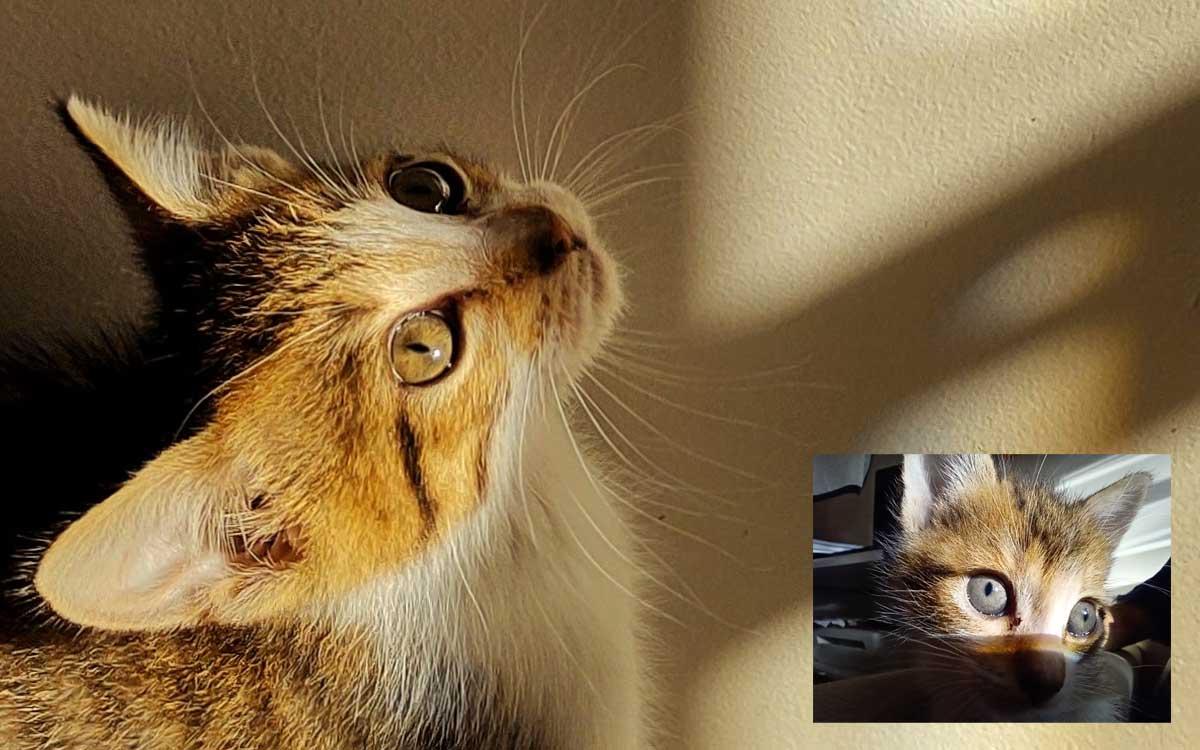 5 trucos para tomarle fotografías a tus mascotas desde casa