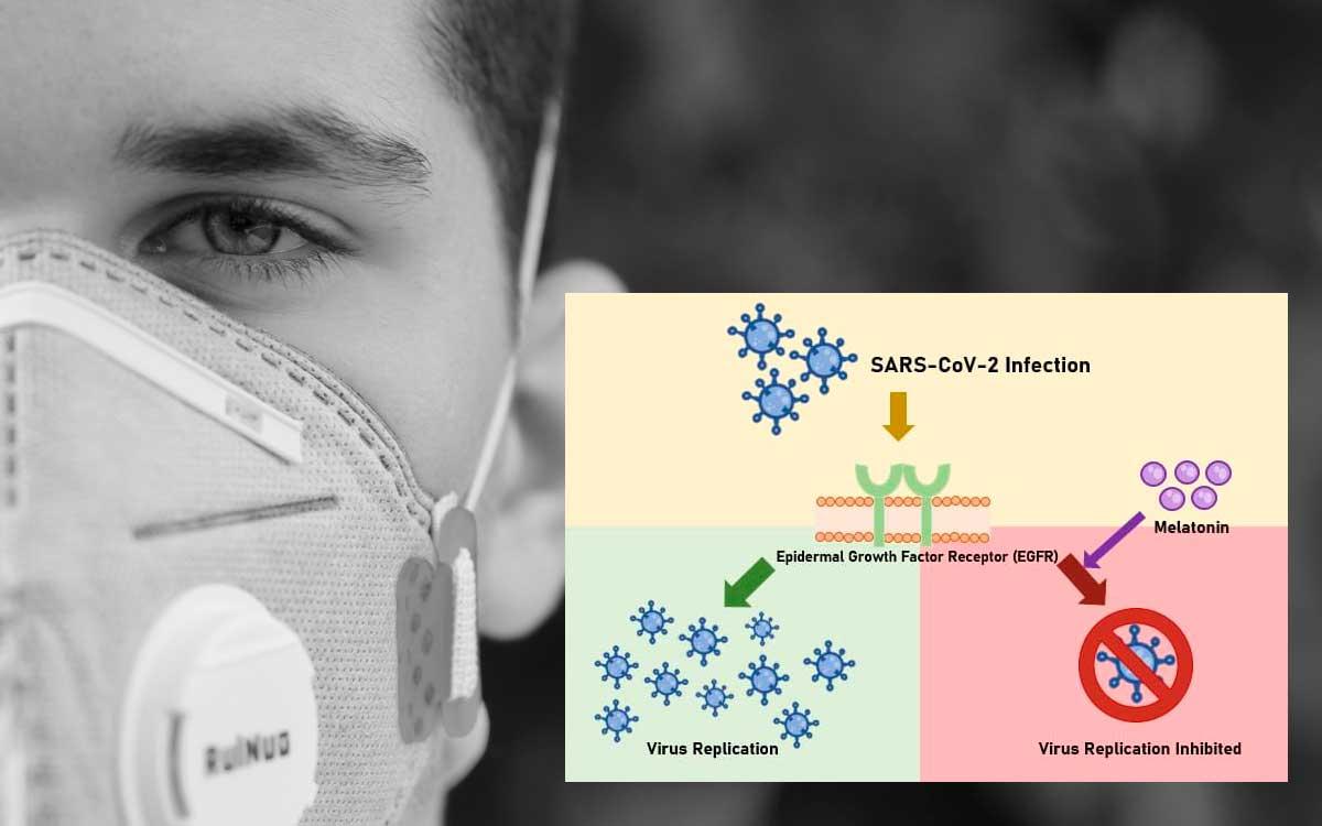 Científicos españoles confirman que la Melatonina bloquea replicación del virus COVID-19